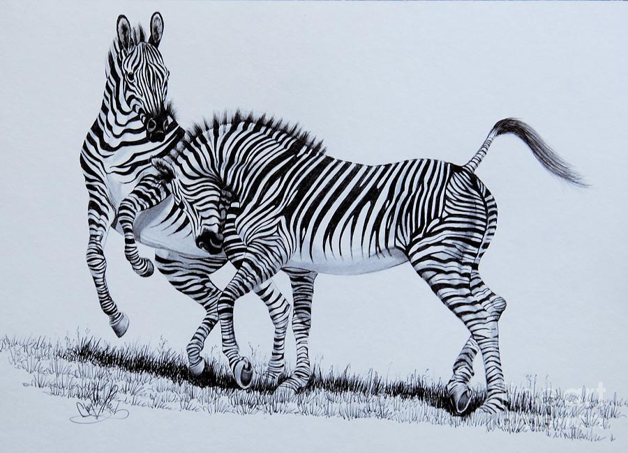 Zebra Play Drawing by Cheryl Poland