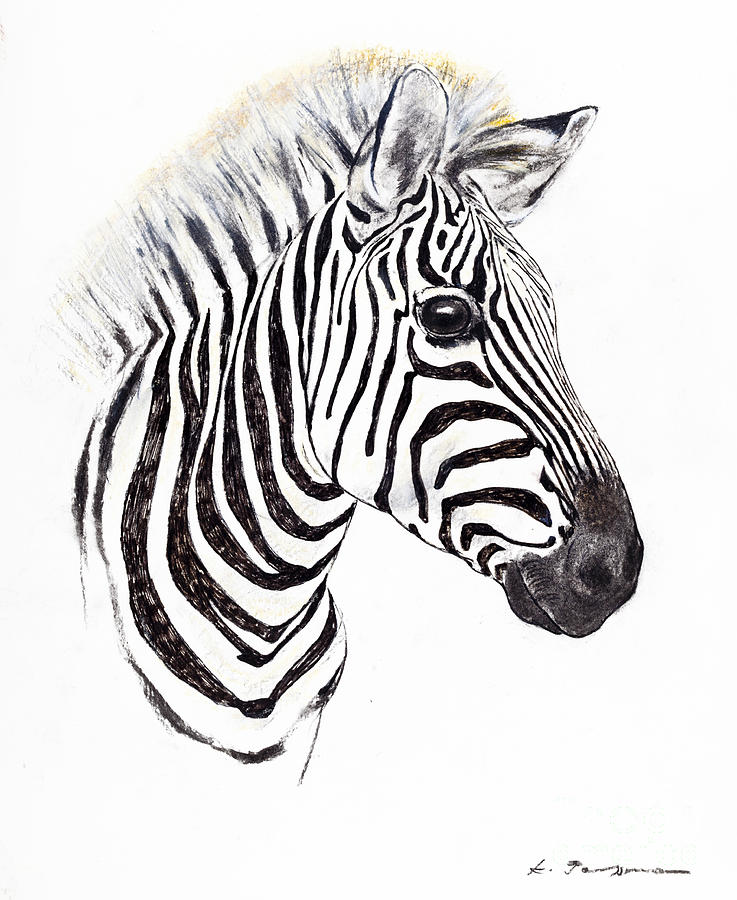 Zebra Portrait Pastel by Kurt Tessmann