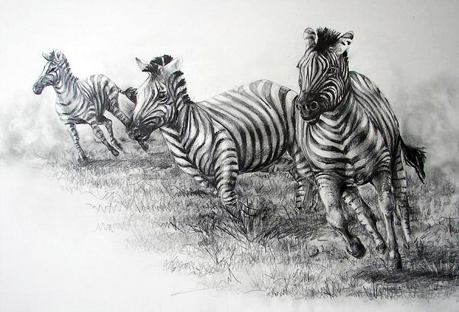 Zebra Running Drawing By Samantha Anne Hutchinson