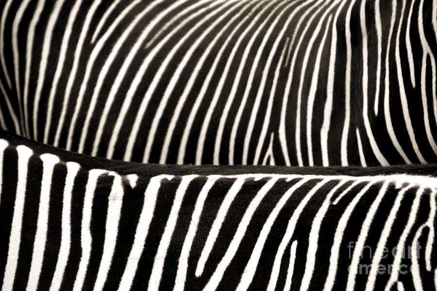 Zebra Photograph - Zebra Stripes by Jackie Farnsworth