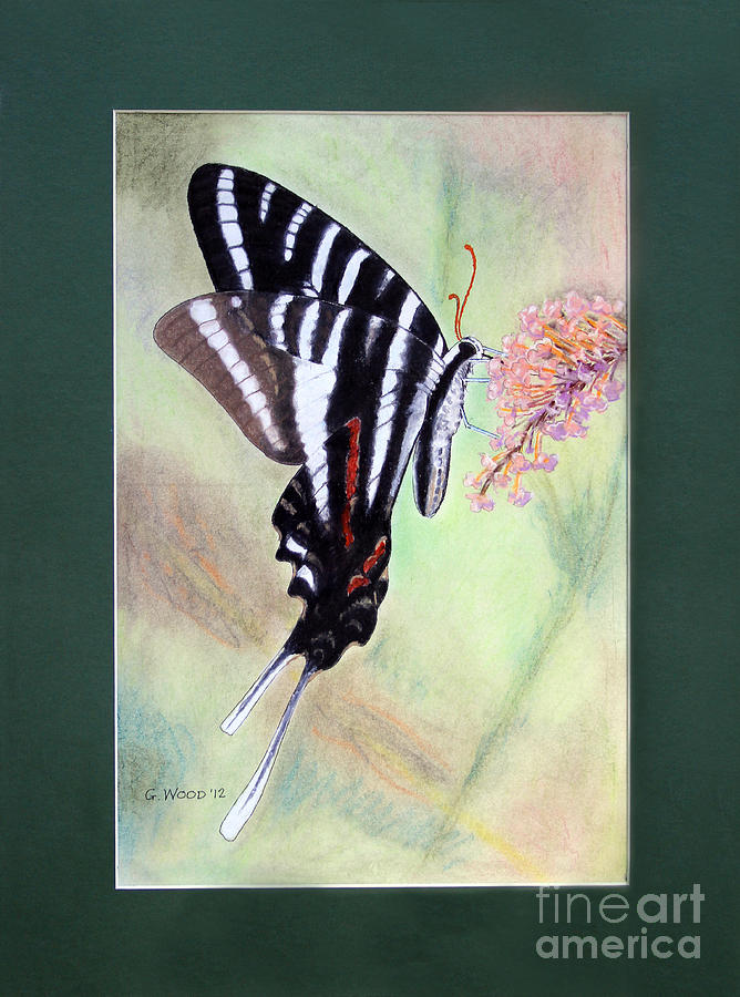 Zebra Swallowtail Butterfly Photograph - Zebra Swallowtail Butterfly By George Wood by Karen Adams