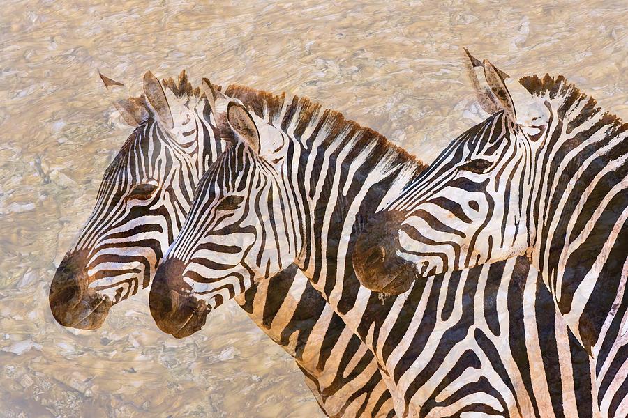 Zebra Photograph - Zebras 5236b by Jeff Grabert