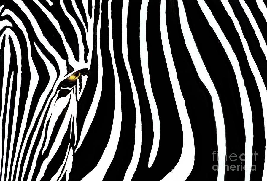 Zebra Photograph - Zebressence by Dan Holm