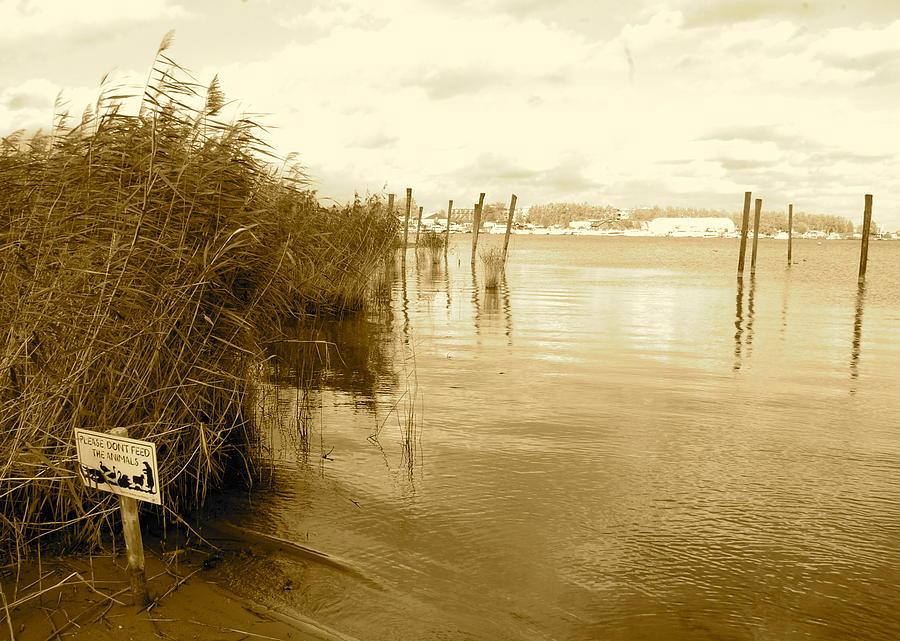 Beach Photograph - Zeeburg Beach by Karen Weetman