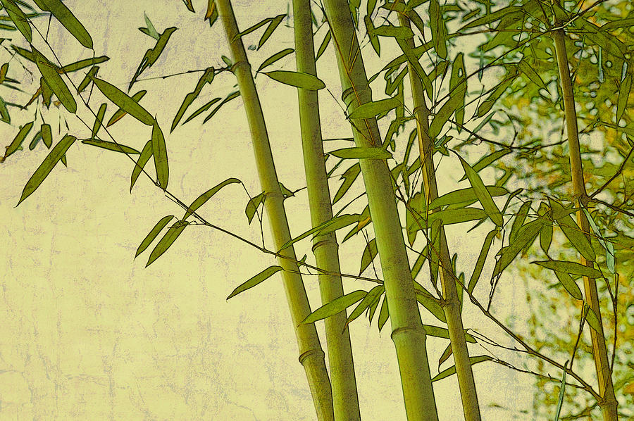 Zen Bamboo Abstract I Digital Art by Marianne Campolongo