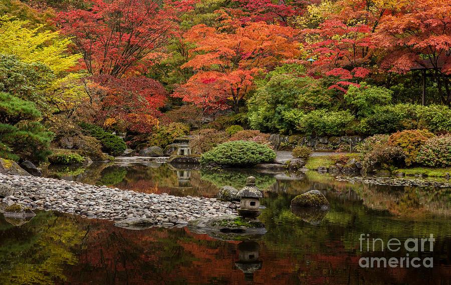 Fall Colors Photograph - Zen Foliage Colors by Mike Reid
