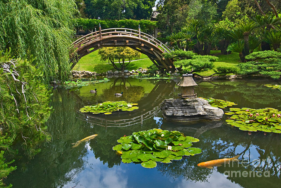 Zen japanese garden with moon bridge and lotus pond with for Japanese koi water garden