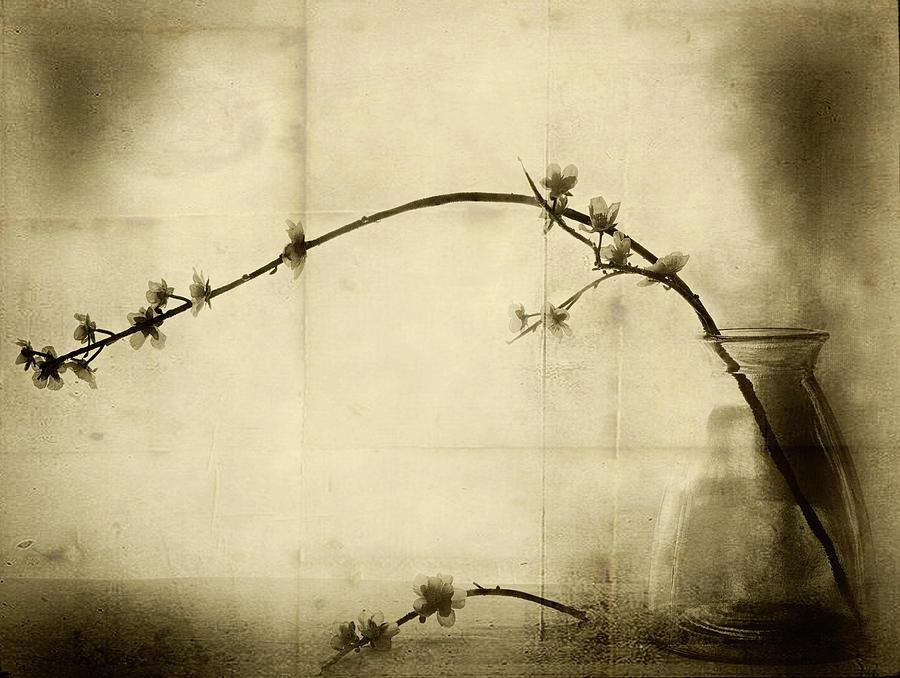 Cherry Photograph - Zen by Jeffrey Hummel