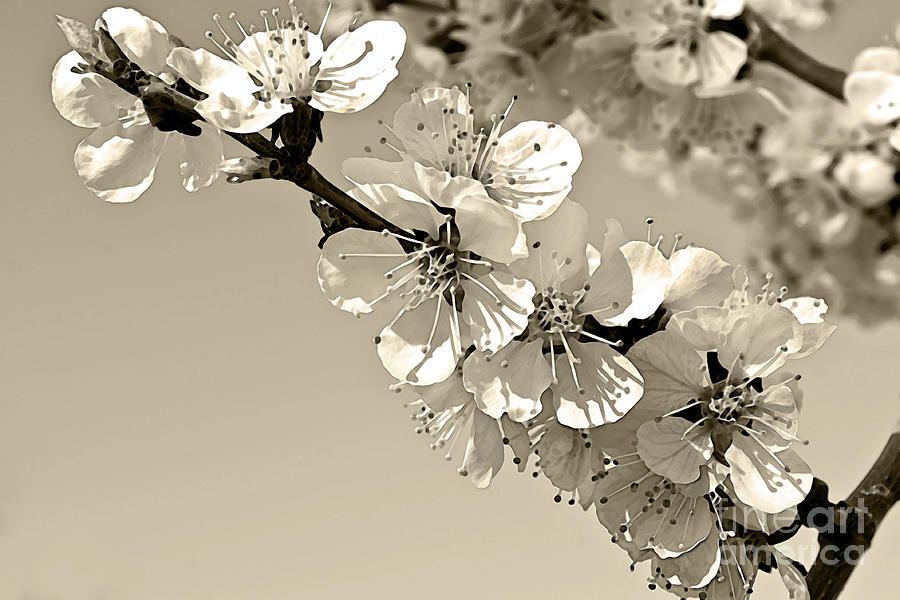 Zen Photograph