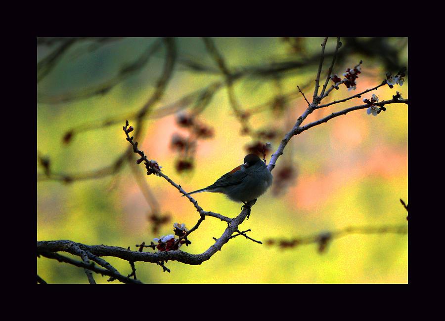 Springtime Photograph - Zen Spring by Susanne Still