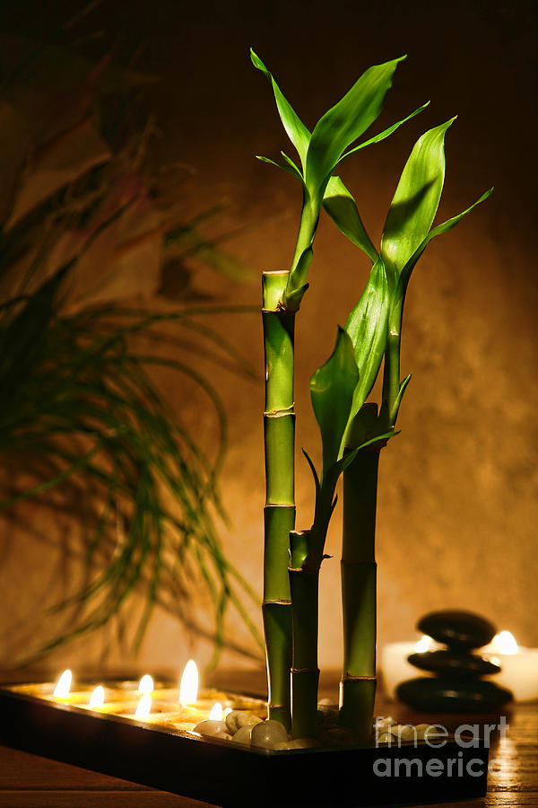 Bamboo Photograph - Zen Time by Olivier Le Queinec