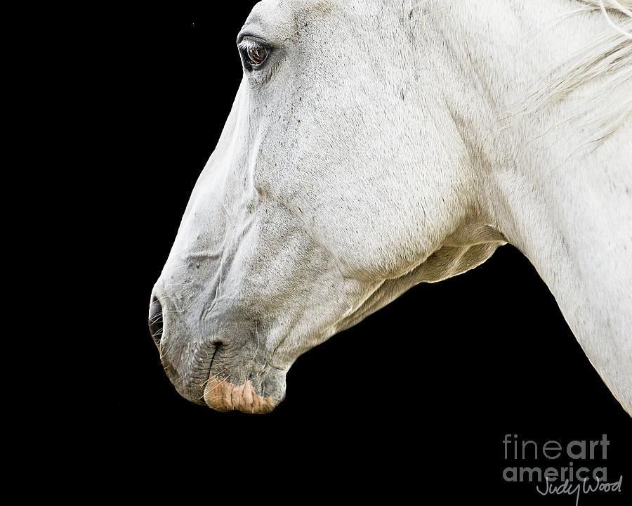 Horse Digital Art - Zeniah Base Shot by Judy Wood