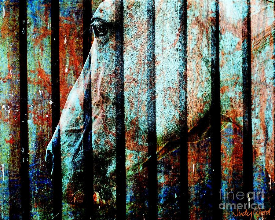Horse Digital Art - Zeniah Variation 11 by Judy Wood