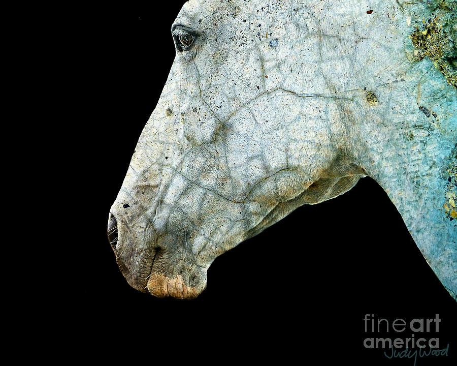 Horse Digital Art - Zeniah Variations 6 by Judy Wood