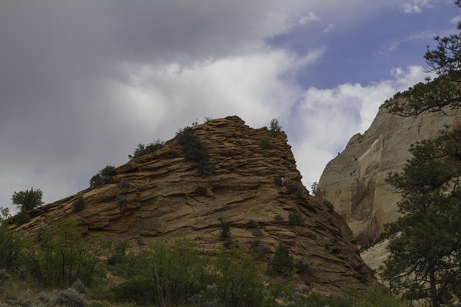 Zion Bighorn Sheep Photograph