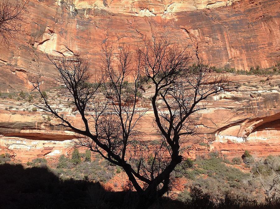 Zion Photograph - Zion Canyon Tree #1 by Feva  Fotos