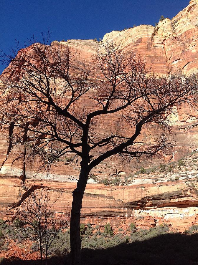 Zion Photograph - Zion Canyon Tree #2 by Feva  Fotos