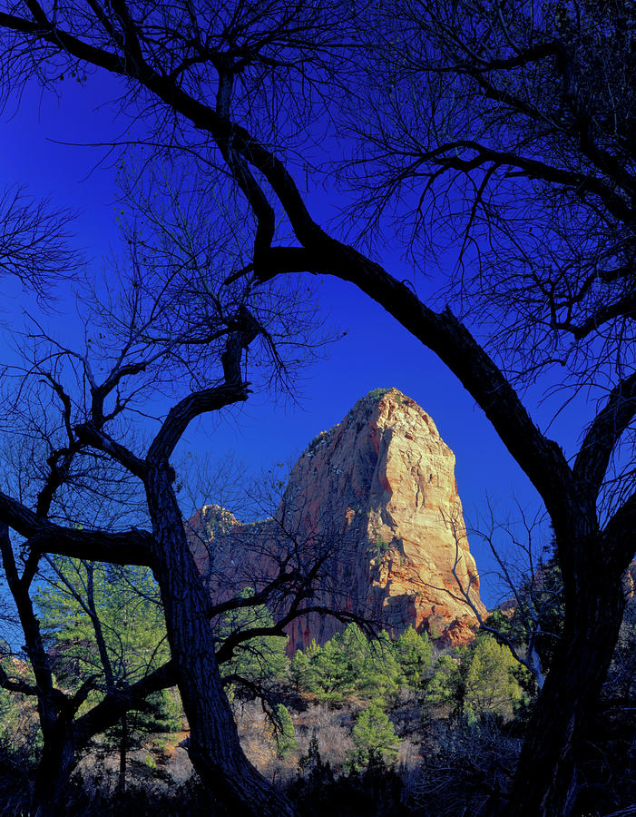 America Photograph - Zion National Park, Utah by Scott T. Smith