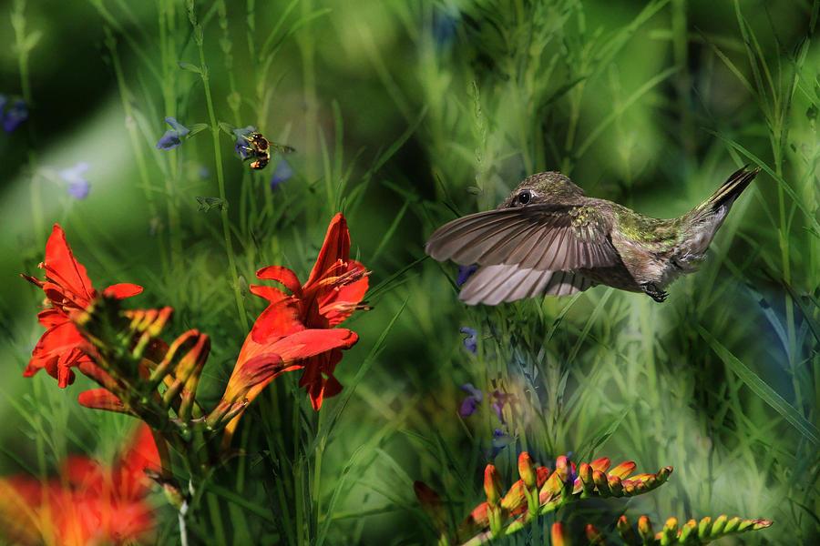Hummingbird Photograph - Zip-a-dee-doo-dah by Donna Kennedy