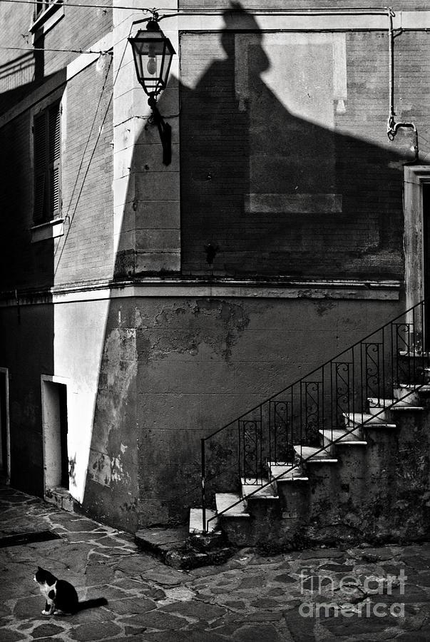 Zorro Photograph - Zorros Cat by Michel Verhoef