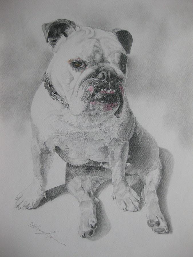 Dog Drawing - Zsu Zsi by Melanie Spencer