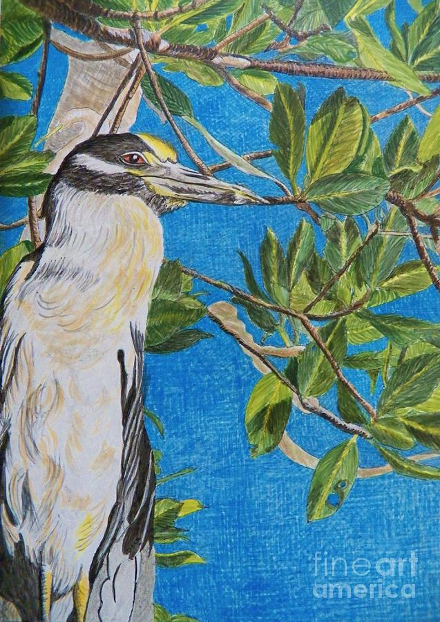 Night Heron Painting -    Yellow Crested Night Heron Painting by Judy Via-Wolff