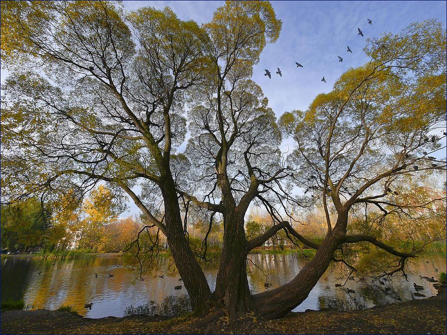 Landscape Photograph -  A Day Of October by Vladimir Kholostykh