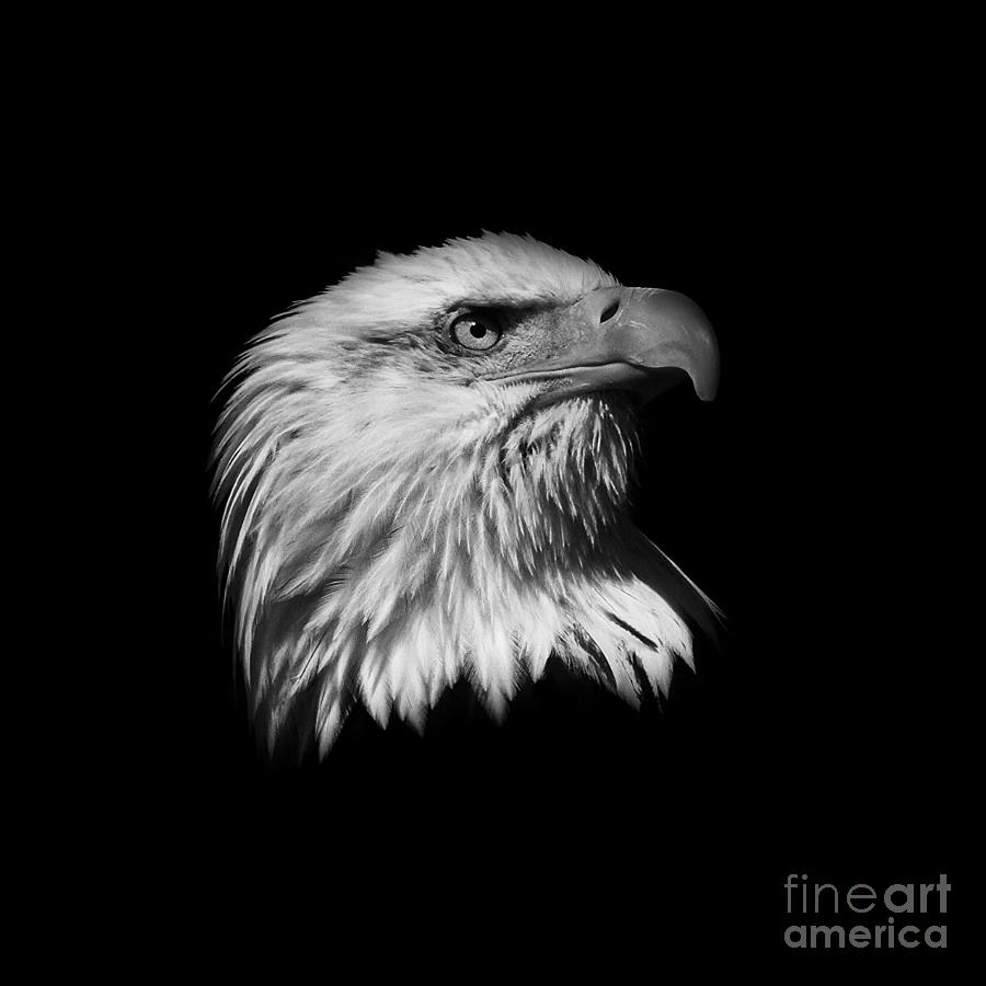 Black And White Photograph -  Black And White American Eagle by Steve McKinzie