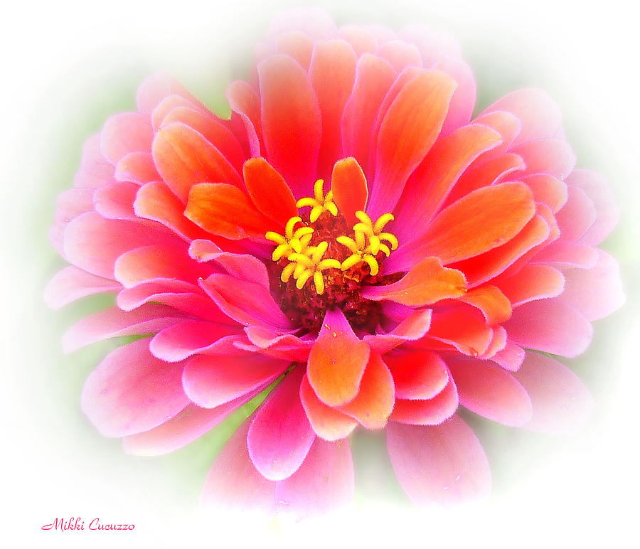 Nature Photograph -  Flower On White by Mikki Cucuzzo