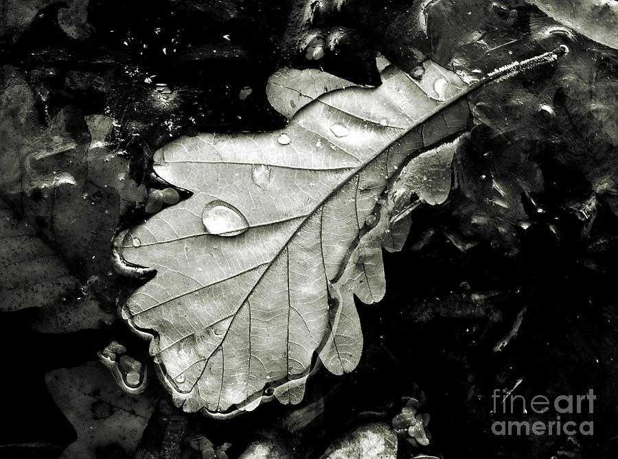 Nature Photograph -  Leaf by Odon Czintos