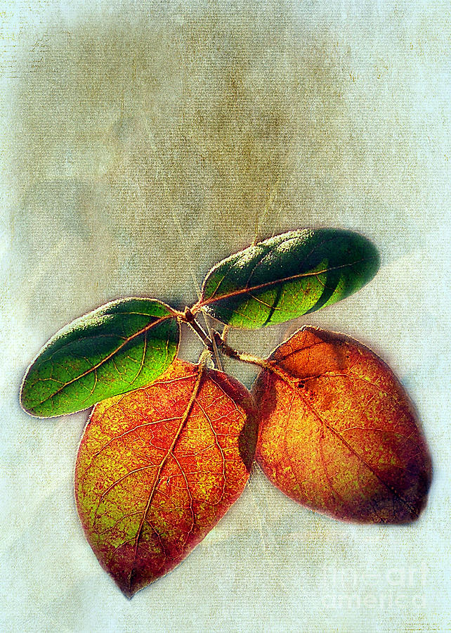 Leaves Photograph -  Memory Of Leaves by Judi Bagwell