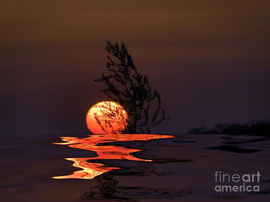 Tree Photograph -  Our Sun by Renate Knapp