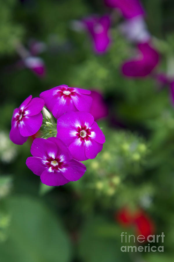 Flower Photograph -  Pretty Flower by Patty Malajak
