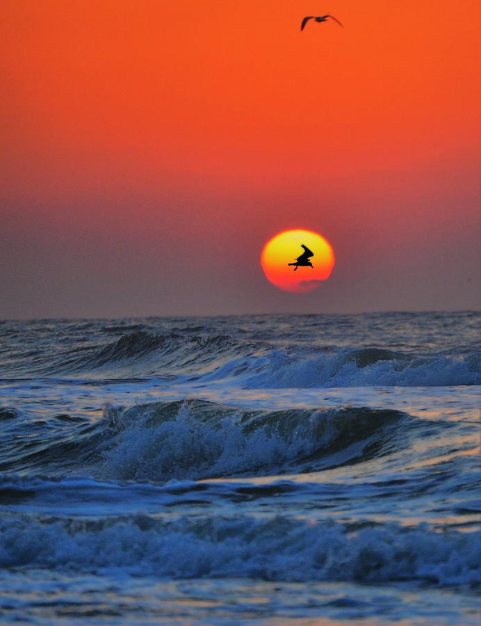 Beach Photograph -  Seagulls Silhouetted by Emily Stauring