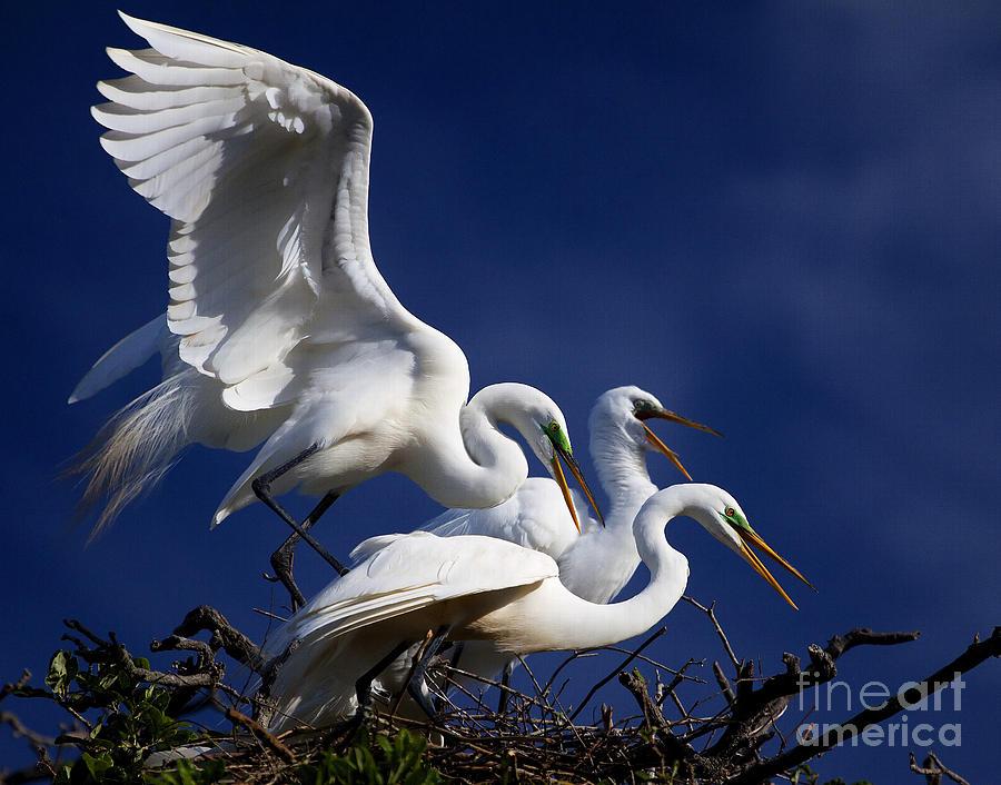 Birds Photograph -  The Gathering by Richard Burr