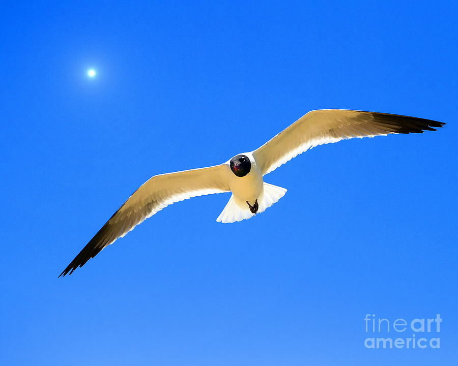 Seagulls Photograph -  To The Sun And Back by Richard Burr