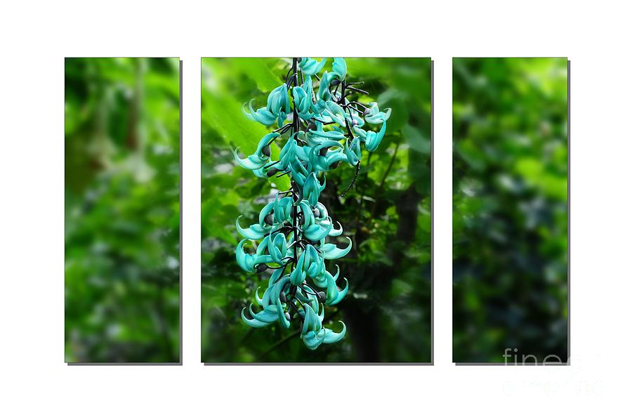Flower Photograph -  Turquoise Jade Vine  by Elaine Manley