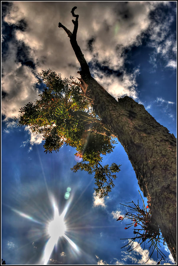 001 Reaching For The Sky Photograph by Michael Frank Jr