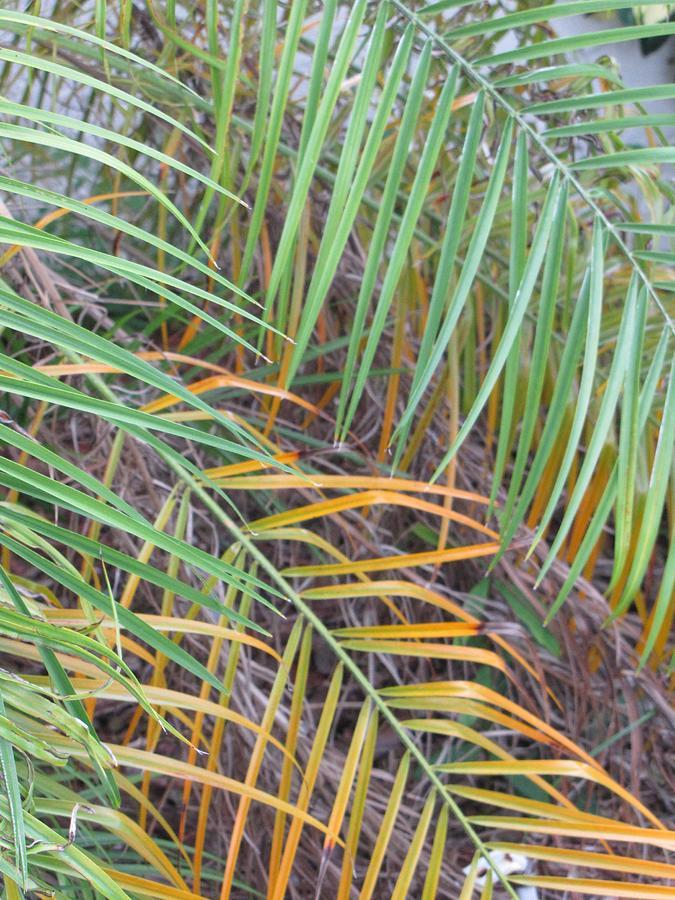 Palm Leaves Photograph - 014 Palm Leaves by Carol McKenzie