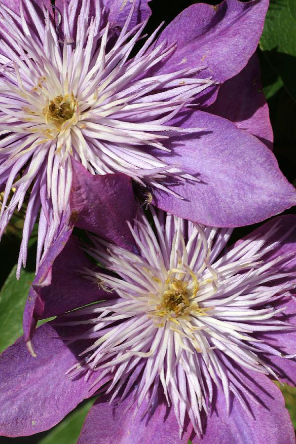 Flower Photograph - 06182012 018 by Mark J Seefeldt