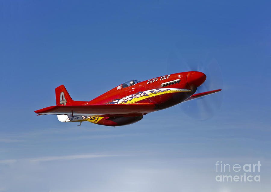 No People Photograph - A Dago Red P-51g Mustang In Flight by Scott Germain
