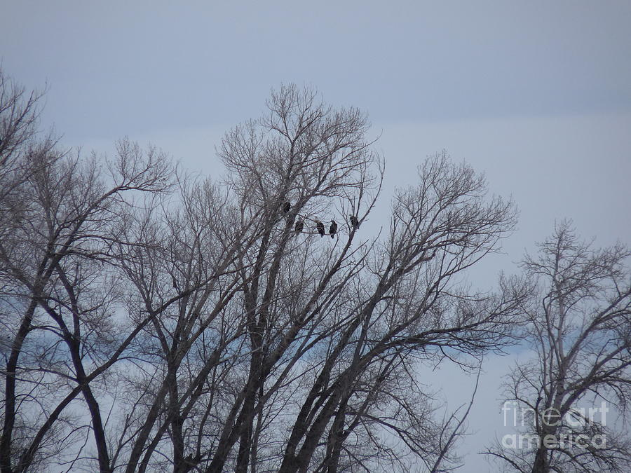 Eagles Photograph - A Gathering Of Eagles by David Bearden