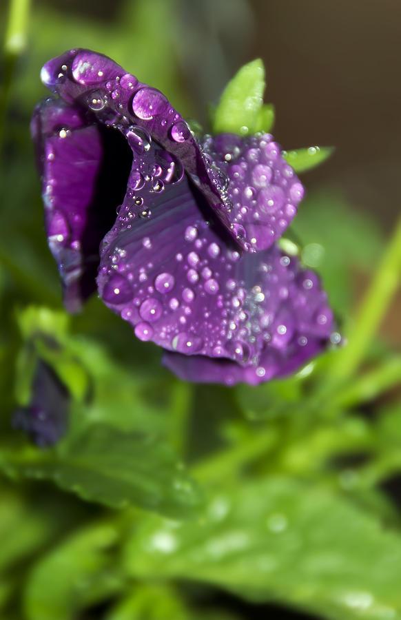 Anniversary Photograph - After Rain by Svetlana Sewell