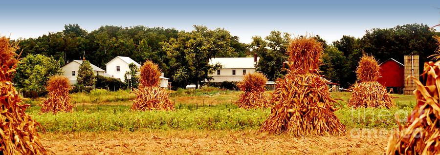 Agriculture Photograph - Amish Corn Harvest by Russell Ford