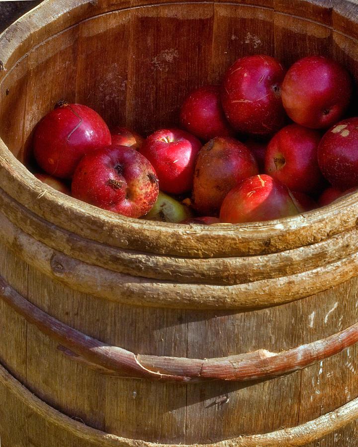 Apple Photograph - Apple Harvest by Joann Vitali