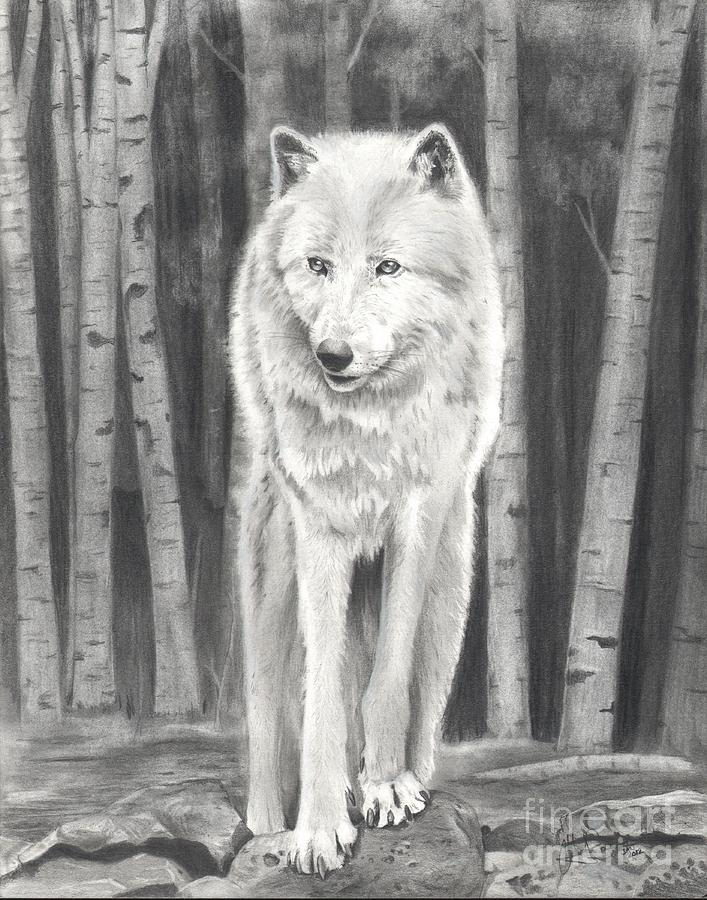 Wolf Drawing - Arctic Wolf by Christian Conner