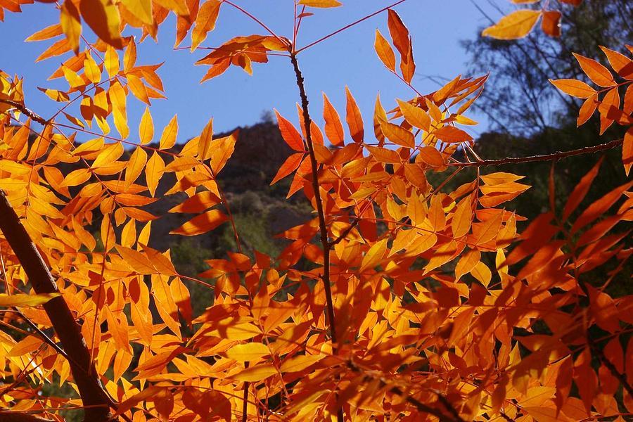 Fall Photograph - Arizona Fall by David Rizzo