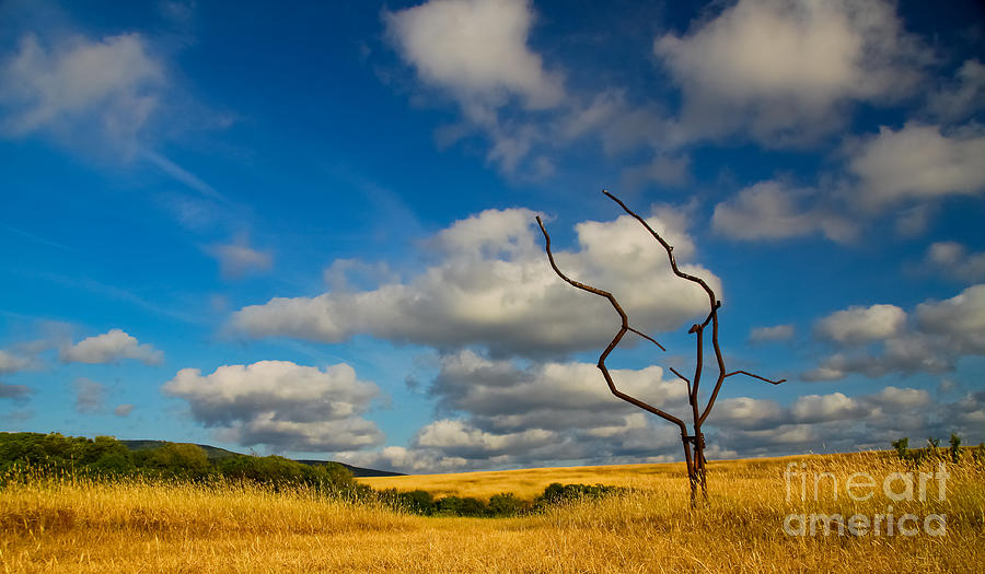 Artificial Nature Photograph - Artificial Nature by Slavyan Kostov
