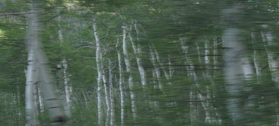 Aspen Digital Art - Aspen Blur by Bill Kennedy