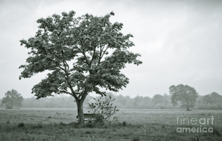 Grey Digital Art - August In England by Andy Smy